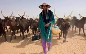 Anti-Open Grazing: Southern Governors Passed laws They can't Execute – El-Rufai